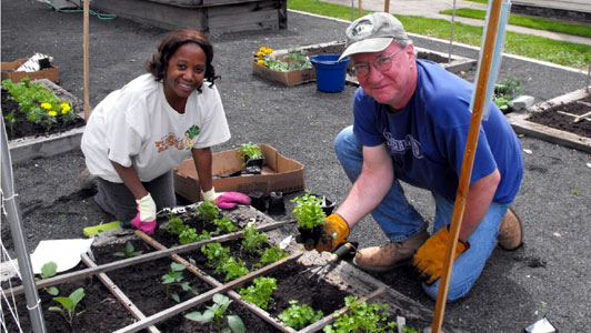 planting greens in community garden bed